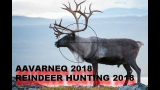 Aavarneq 2018 - Rensdyrjagt 2018 - Reindeerhunting 2018