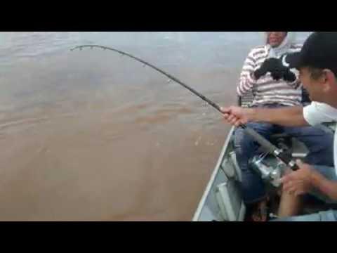Pesca dá pirarara rio Araguaia Luiz Alves Go