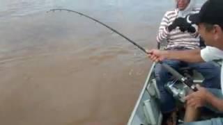 Baixar Pesca dá pirarara rio Araguaia Luiz Alves Go