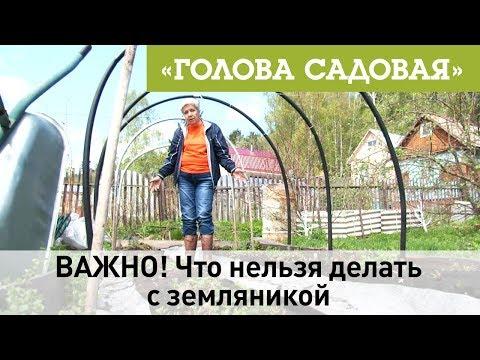Клуб Любителей Муравьев