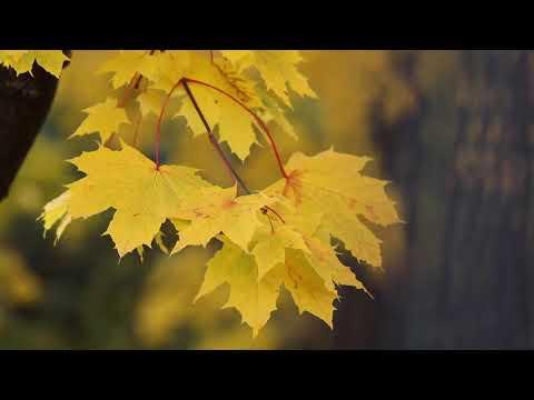 Herbst Magie - Norbert van Tiggelen - Kilofonmusik Horst Rat