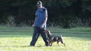 Hound Dog Training - Mazie Obedience Graduate