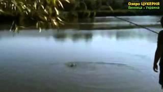 Вот это трофей! • Карповая рыбалка на Озере Цукерня(Бывает и такой улов :) original video © Ende22., 2013-08-07T16:09:10.000Z)