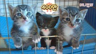 Kittens' Mom Is A BedlingtonTerrier..?!