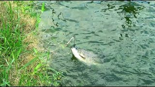 Huge Fishing Videos By Using Fishing Rod And Fish Hooks