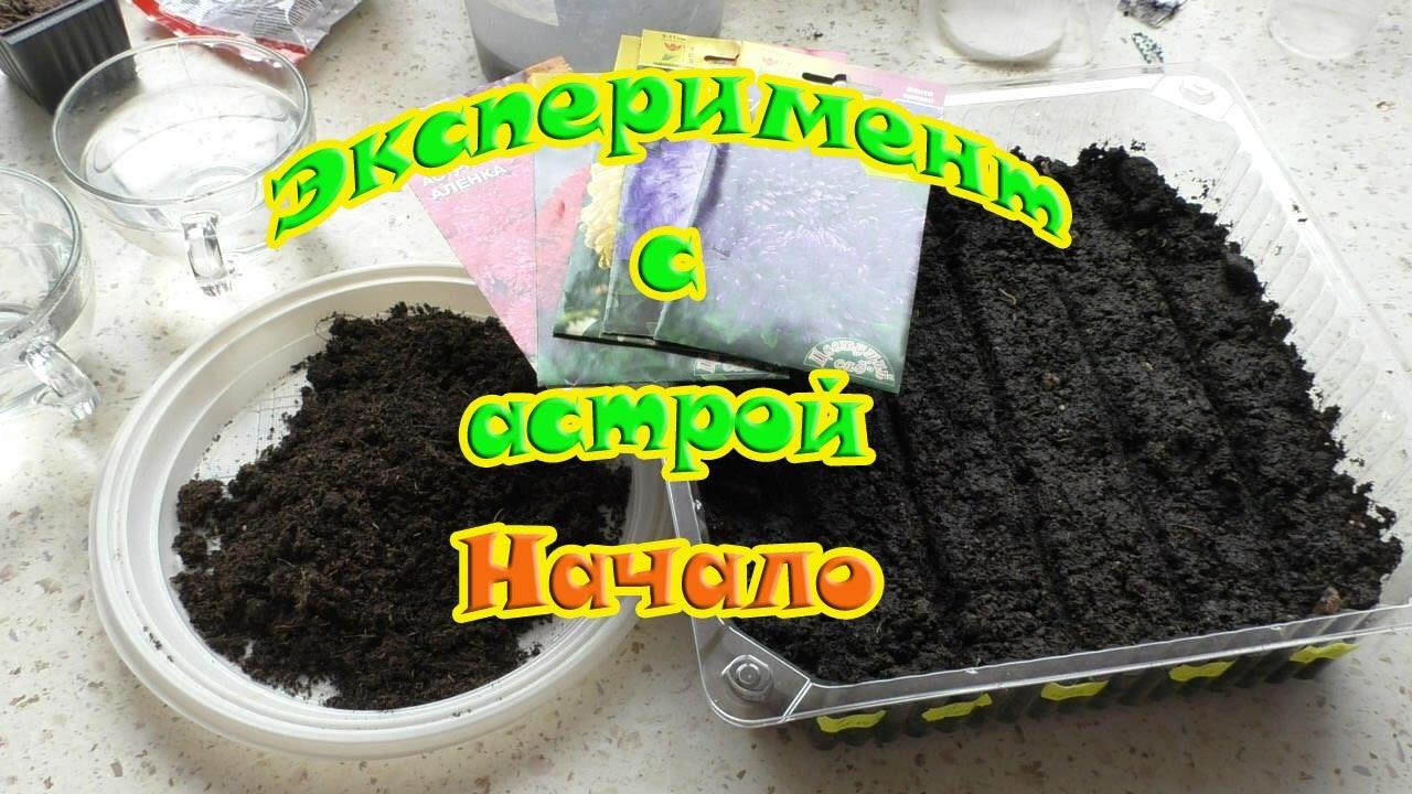 Выращивание бонсай из семян /Альбиция и Сакура - YouTube