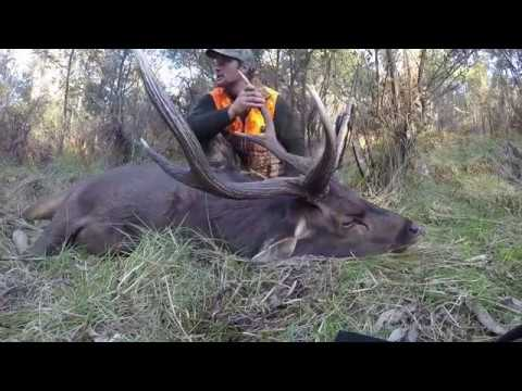 MountainMan's BackPack Hunting Gear Review, Sambar Hunting, Victoria Highcountry