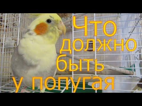 Что должно быть в клетке попугая и чем его кормить.