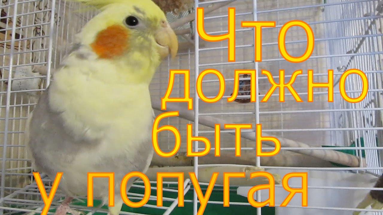 32 попугая 7 клеток