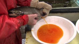 Nova Scotia Fishing Hatcheries