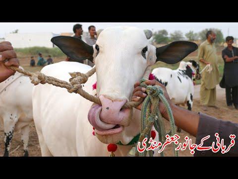 Jaffir Mandi 29 07 2020 Sunny Video Fateh Jang Part 01
