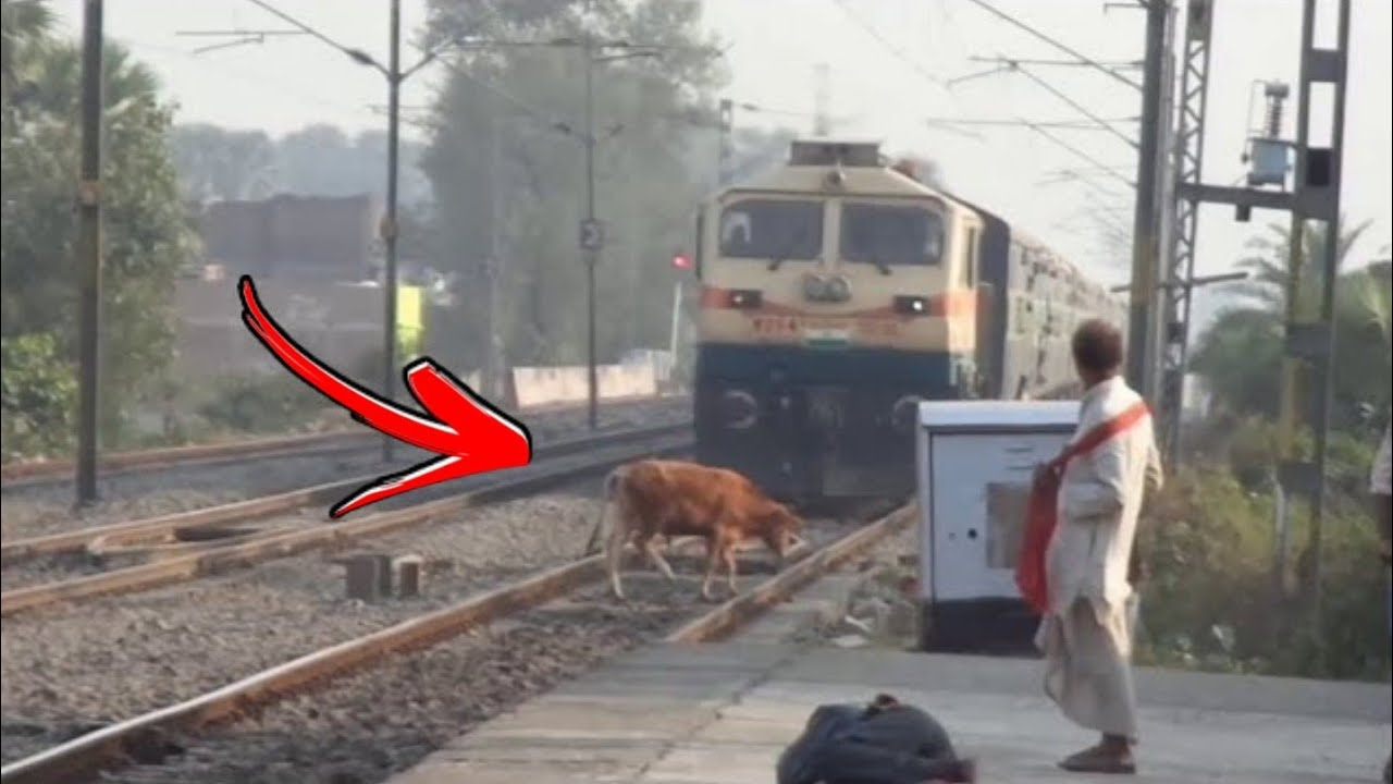 Animal vs Tain - Animals Hit By Train Compilation #4