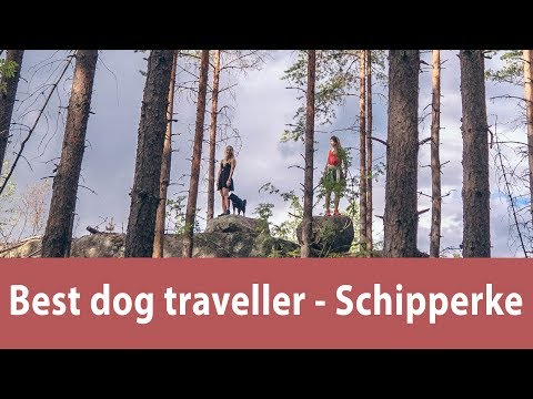 Best dog traveller - Schipperke