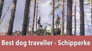 Best dog traveller  Schipperke