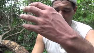 FRANK CUESTA - Me muerde una vibora (Natural Frank)
