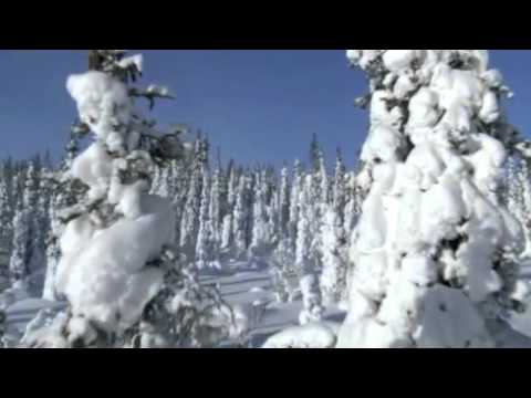 The Taiga Biome Commercial 2