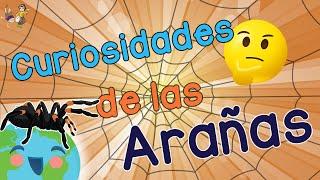 ¿Cuántas patas tiene una araña?| Curiosidades  de las Arañas | Videos Educativos para Niños