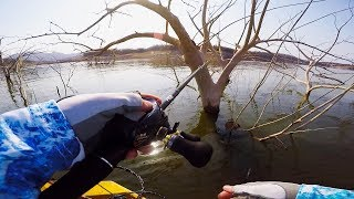 Fishing GIANT Trees for GIANT Bass in Mexico