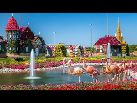 Best Time To Visit 🐪 Miracle Garden Dubai ᴴᴰ █▬█🌴▀█▀