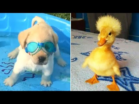Baby Animals 🔴 Funny Cats and Dogs Videos Compilation (2020) Perros y Gatos Recopilación #20