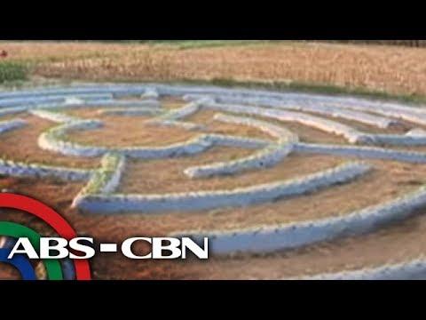Bandila: Sunflower maze, patok sa Pangasinan