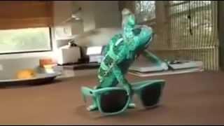 как меняет цвет хамелеон.  chameleon changes color