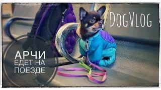 DogVlog: путешествуем с Арчи на поезде | Билет для собаки на поезд