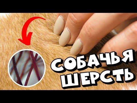 Вопрос: У собак каких пород шерсть не выпадает и растет всю жизнь?