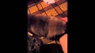 Приют Гав - вечный щенок Бусинка
