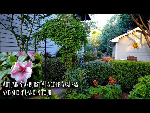 New Plants for 2021 – Autumn Starburst™ Encore® Azaleas – Mini Garden Tour