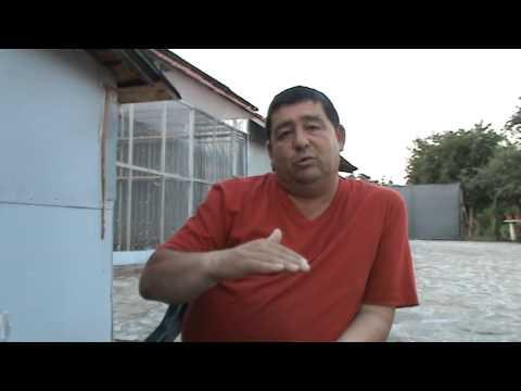 Interviu columbofil dl Marian Tanasoiu Baicoi Romania 26 iulie 2013 part 1