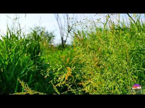 ВОЛШЕБСТВО ЛЕТНЕГО ЛУГА. Травы, сверчки, пение птиц, релакс, природа, место силы, для души.