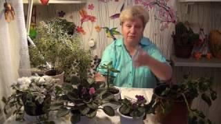Блог Светланы Кацаповой 17 выпуск (комнатные растения: толстянка, балеринка, танцующий скелет)