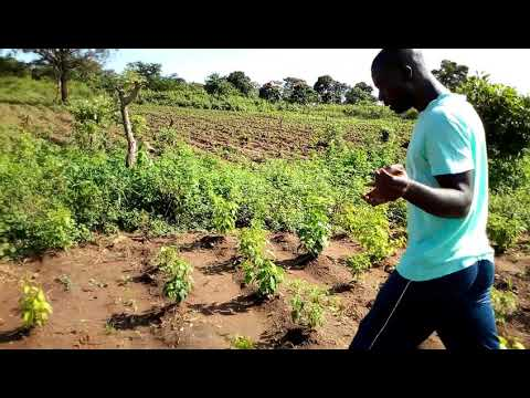 Agribusiness in Beyla Guinea