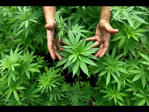 9 Places Marijuana Is Legal (HD)