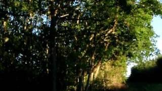 Cuckoo and Evening Birdsong in Fermyn Woods Northamptonshire UK