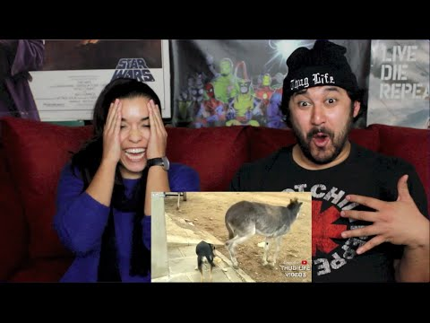 ANIMAL THUG LIFE COMPILATION 22 REACTION!!!