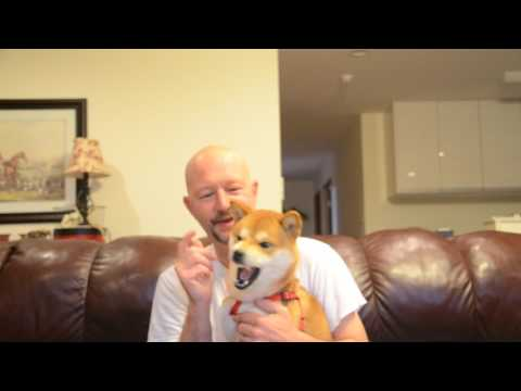 Shiba Inu Breaking your Puppy From Biteing This will work for sure !!!!! Works with other breeds