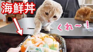 妹の海鮮丼を狙う短足猫がこちら