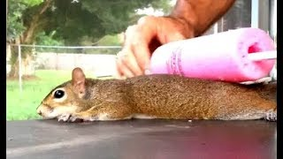 making-a-squirrel-pancake