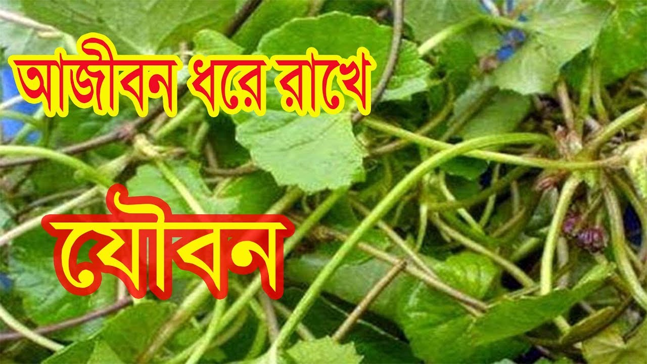 আজীবন যৌবন ধরে রাখতে সাহায্য করে যে পাতা । Bangla helth tips