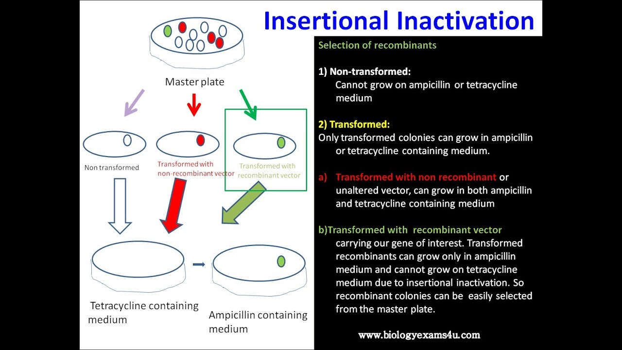 Inactivation