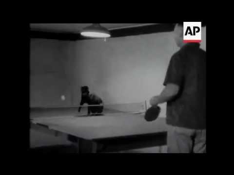 Cat Plays Ping Pong! – 1951