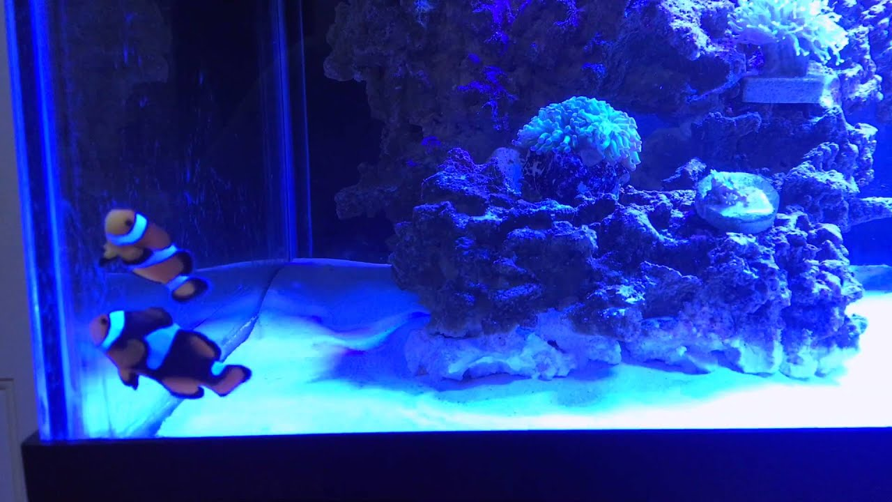Freshwater fish acclimation - How To Add Saltwater Fish To Your Aquarium Acclimate