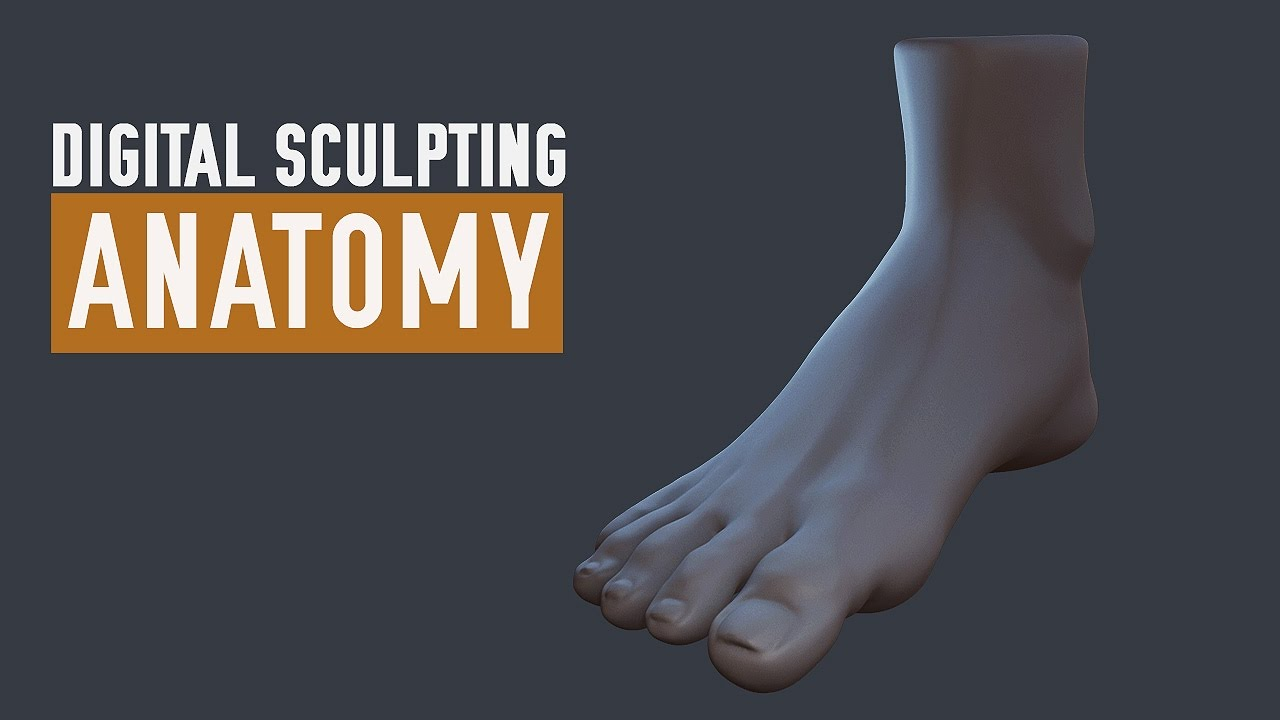 ZBrush Human Anatomy - Feet - YouTube