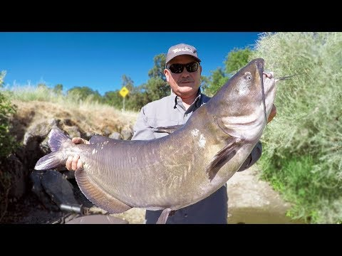 WORLD RECORD CATFISH