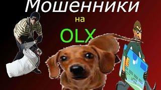 Обман,Olx Пропала Собака. Часть 2