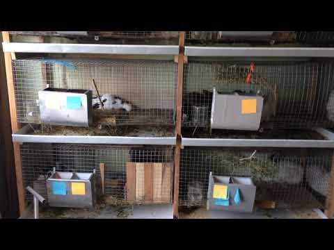 Содержание кроликов в гараже!