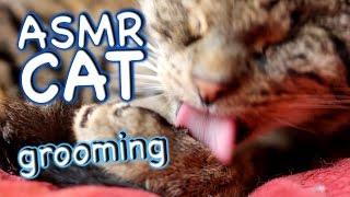 ASMR Cat - Grooming #19