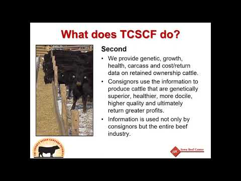 The Profit Picture  Understanding Feedlot and Carcass Data
